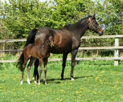 Hyperspectra 2012 filly by Sea The Stars