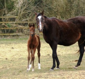 2013 bay colt by Dutch Art