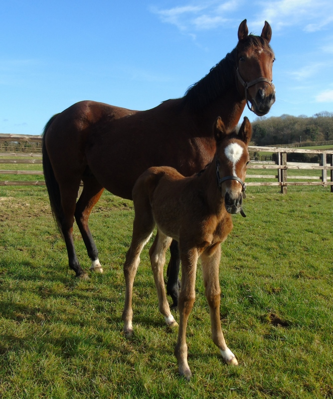 2018 filly by Nathaniel