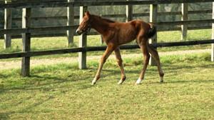 2012 Ballet Ballon filly by Oasis Dream