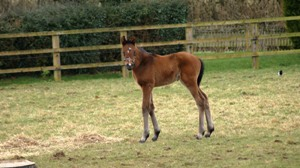 Bay colt by Oasis Dream