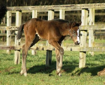 2015 Colt by Invincible Spirit