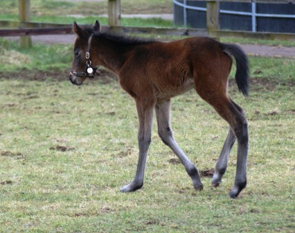 Island Vista 2012 filly by Rock of Gibraltar