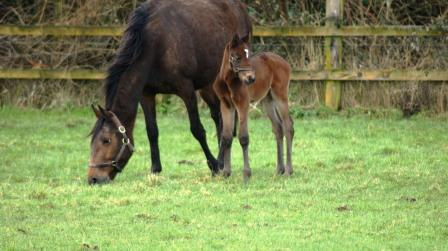 Bay filly by Rip Van Winkle