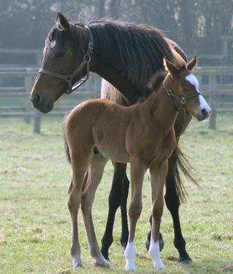 2012 Colt by Champs Elysees