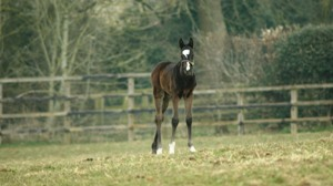 2013 Filly by Dansili